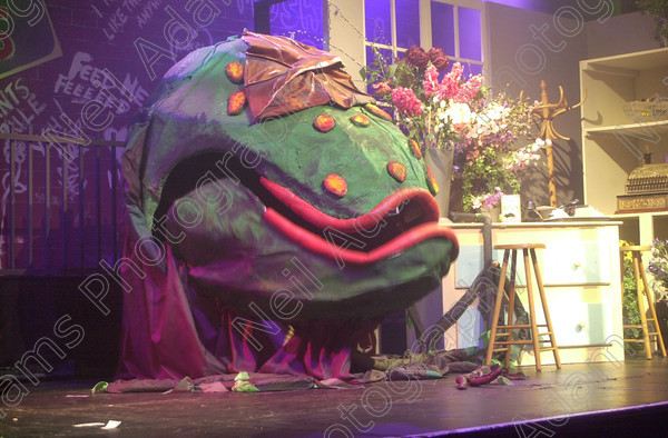 DSC 0425 